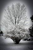 Högväxt träd efter snöstormen Royaltyfri Foto
