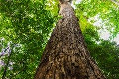 Högväxt träd i skog Arkivfoto