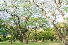 Högväxt träd i trädgårdarna Fotografering för Bildbyråer