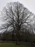 Högväxt träd med ett staket arkivfoton