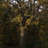 Högväxt träd med orange sidor royaltyfri bild
