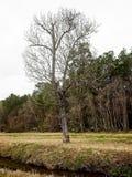 Högväxt träd vid liten vik i vinter fotografering för bildbyråer
