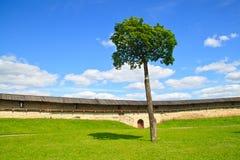 högväxt tree Arkivbild