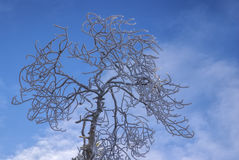 högväxt tree Royaltyfri Fotografi