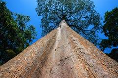 högväxt tree arkivfoto