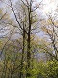 högväxt tree arkivfoton