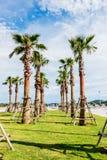 högväxt tree för park Royaltyfria Bilder