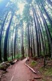högväxt trees Royaltyfri Fotografi