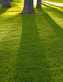 högväxt trees för långa skuggor Arkivfoton