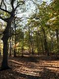 Högväxta högväxta träd Arkivfoton
