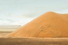 Högväxta lagringsbehållare Hösten låter vara kanten med olika grönsaker på vit bakgrund Kullen av korn, vete, råg, korn, havre, v arkivfoto