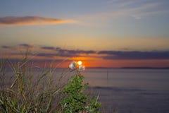 Högväxta tistlar för gul solnedgång Royaltyfri Foto