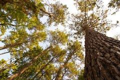 Högväxta träd i rainforesten royaltyfri fotografi