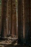 Högväxta träd i träna Royaltyfri Fotografi