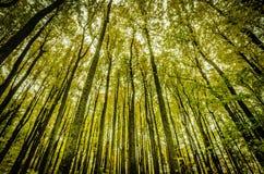 Högväxta träd på nedgången Arkivfoto