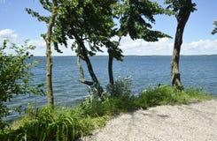 Högväxta träd på vattenkanten Fotografering för Bildbyråer
