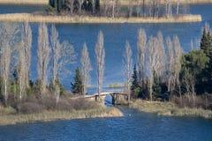 Högväxta vita träd och liten bro Royaltyfria Bilder