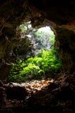Höhle abgedeckt mit Bäumen. stockfoto