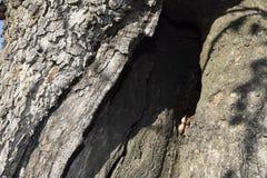 höhle ein Baumstamm mit einer Höhle Beschaffenheit Stockfotos