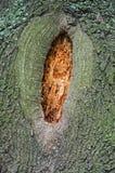 Höhle im Baum Lizenzfreie Stockfotos
