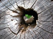 Höhle im Holz Stockbild