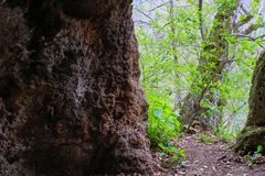 Höhle im Wald Stockfoto