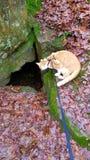 Höhlen-Katze Stockfotografie