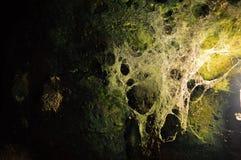 Höhlen-Spinnennetze lizenzfreie stockbilder