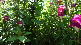 Höhlenblumengarten stock video footage