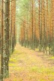 Höjd sörjer skogen Fotografering för Bildbyråer