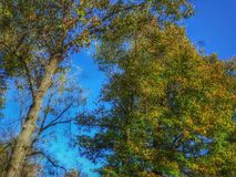 Höjdpunkt upp i träden royaltyfri fotografi