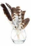 Hökfjäder i den isolerade glass kruset Royaltyfri Bild