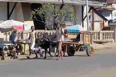 Hölle Ville, neugierig ist, Madagaskar Stockbild