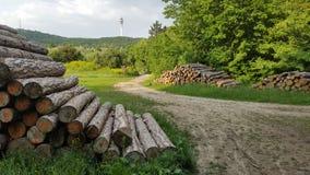 Hölzern meldet die Wälder von Budapest an Stockfotos