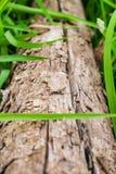Hölzern mit Hintergrund des grünen Grases Stockfotografie