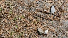Hölzerne Ameisen stock footage