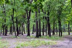 Hölzerne Bäume am Sommertag Stockfoto