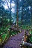 Hölzerne Bahn im tropischen Regenwald Stockfoto