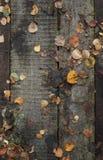 Hölzerne Bahn mit trockenem Herbstlaubhintergrund Lizenzfreies Stockbild