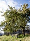 Hölzerne Bank unter dem Apfelbaum Lizenzfreies Stockbild