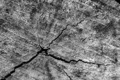 Hölzerne Barke der Nahaufnahme des hinteren und weißen Hintergrundes des Baums und der Beschaffenheit Stockbilder