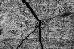 Hölzerne Barke der Nahaufnahme des hinteren und weißen Hintergrundes des Baums und der Beschaffenheit Lizenzfreies Stockbild