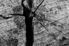 Hölzerne Barke der Nahaufnahme des hinteren und weißen Hintergrundes des Baums und der Beschaffenheit Stockfotografie
