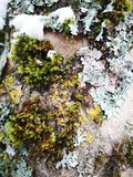 Hölzerne Barke im Winter lizenzfreie stockbilder