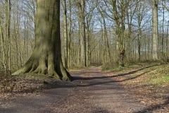 Hölzerne Baumlandschaft der Wegschneise Lizenzfreies Stockbild