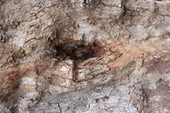 Hölzerne Beschaffenheit Browns mit kleinem Loch Stockbilder