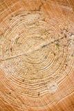 Hölzerne Beschaffenheit des geschnittenen Baumstammes Stockbild