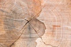 Hölzerne Beschaffenheit des geschnittenen Baumstammes Stockfoto