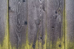 Hölzerne Beschaffenheit des Hintergrundes mit grünem Moos stockfoto