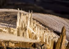 Hölzerne Beschaffenheit Die Beschaffenheit des Baums ist hellbraun, gesägt, Splitter Hintergrund lizenzfreie stockbilder